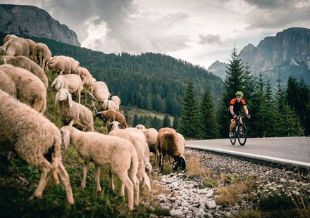 © Roadbike Holidays