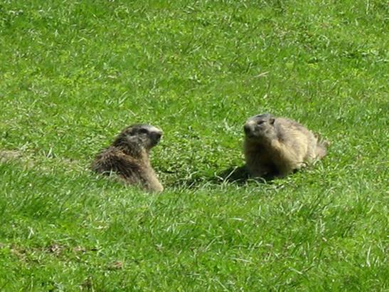 Between marmots and smaragds